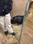 animal shelter 128