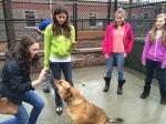 animal shelter 132